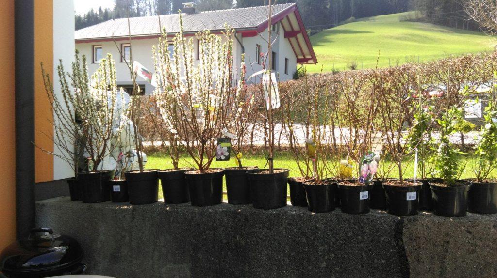 Arbeiten im garten familie zeilinger for Garten arbeiten